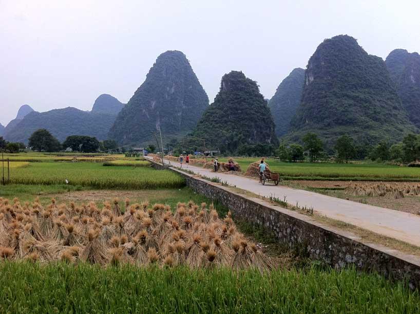 Campos de cultivo en Yangshuo.