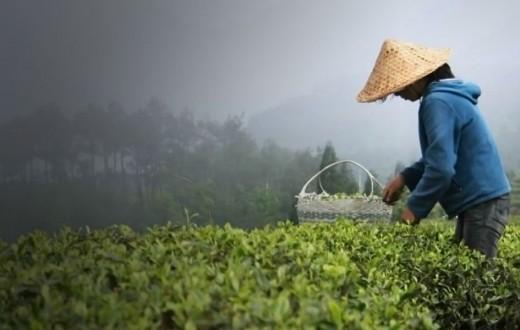 té chino