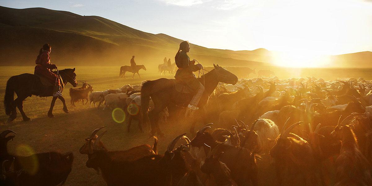 Caballos Mongoles