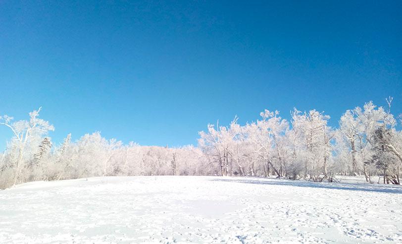 Los árboles escarchados de Jilin