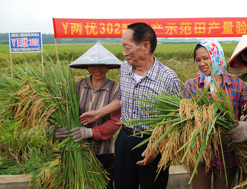 Yuan Longping en un arrozal con campesinas del sur de China.