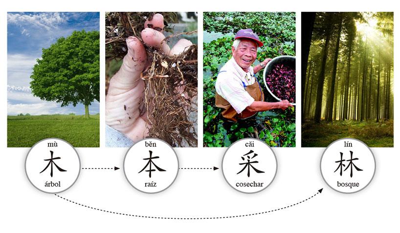 Características morfosintácticas de los caracteres chinos