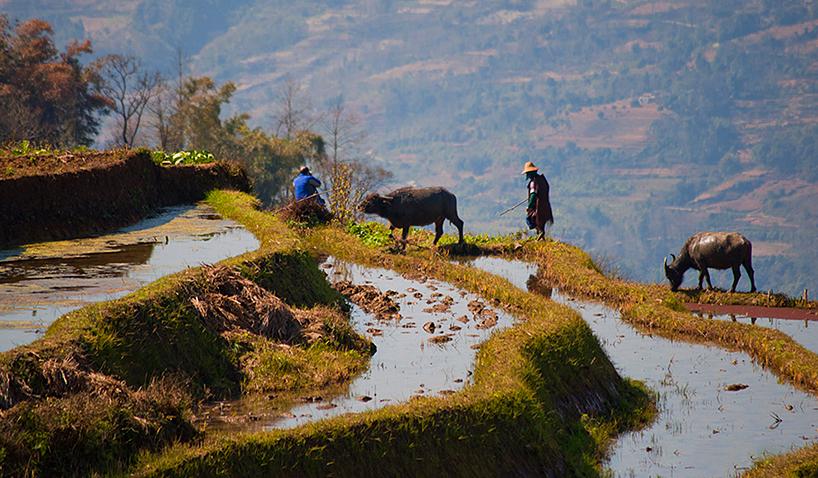 Terrazas de arroz Hani de Honghe